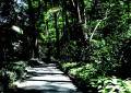 Parque dos Eucalíptos