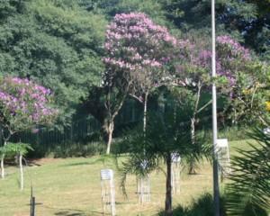 Parque Santa Amélia